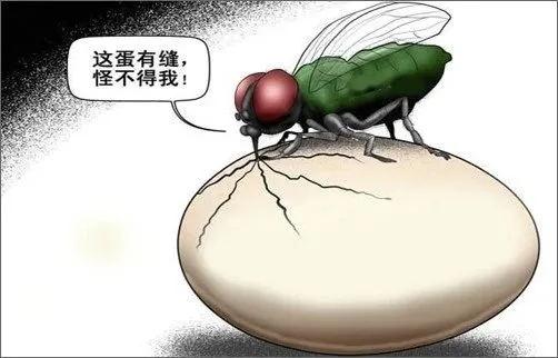 为什么要站在苍蝇一边